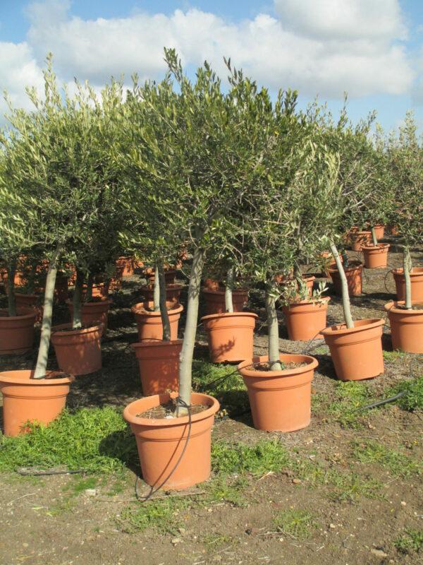 olivier boule