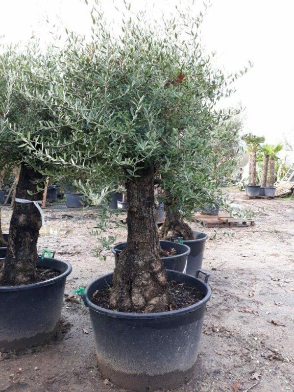 olivier boule lechin