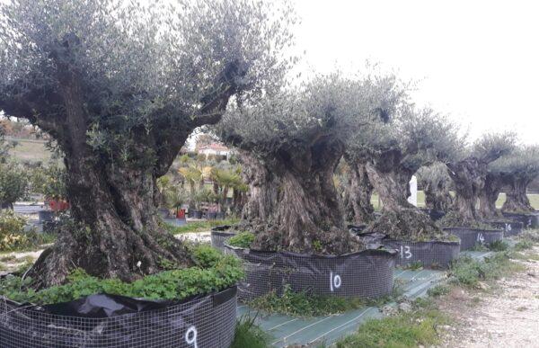 olivier lechin